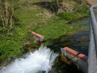 Bedhampton springs