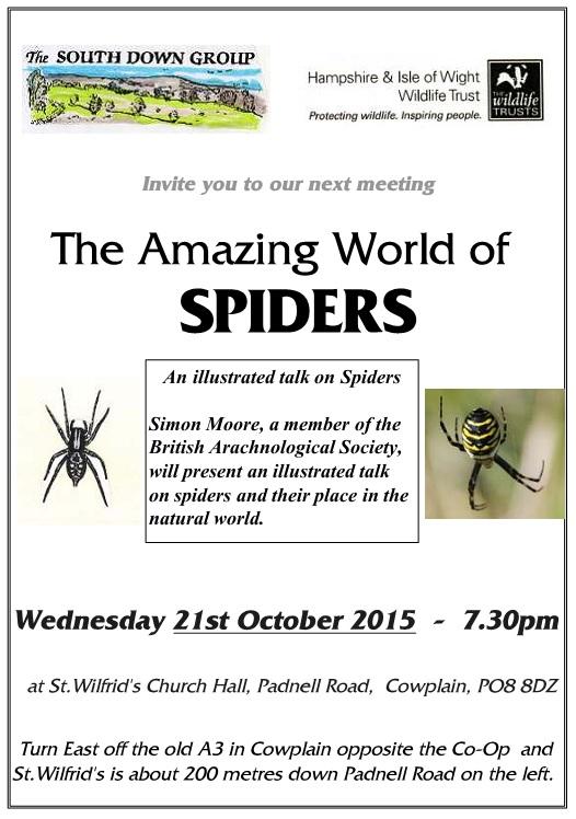 Amazing World Of Spiders